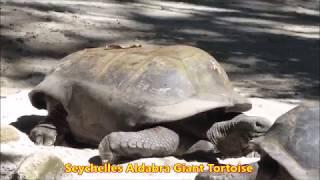 SEYCHELLES Archipelago -  A Visit to the Island of MAHE & Capital VICTORIA thumbnail