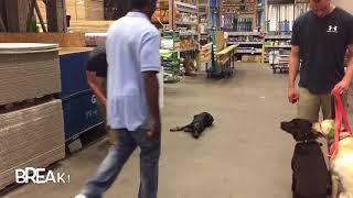 5.5mo Doberman (Cooper) | 2 Week Board and Train Program | Best Dog Training in Spokane
