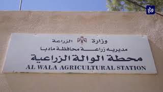 محطة الوالة أقدم محطات الزراعة البحثية تعاني من عدم الاهتمام (13/8/2019)