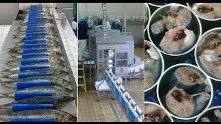 sardine canning machine