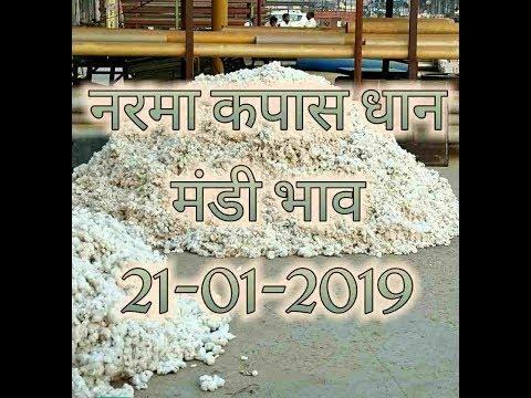 Mandi Bhav 21-01-2019 // नरमा भाव 2019 // कपास मंडी भाव // धान का ताजा रेट