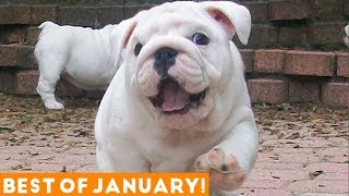 Download Funniest Pet Reactions & Bloopers of January 2018 | Funny Pet Videos Mp3 and Videos