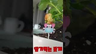 딸기 먹는 아기꽃게