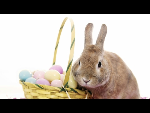 If I Were The Easter Bunny.
