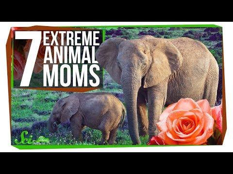 7 Extreme Animal Moms