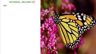 Урок бабочки. Как добиться Успеха.
