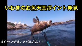 セクシー #いわき釣り #密漁.