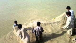 UMAR fishery hatchery video(1)