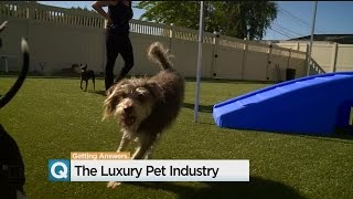 Sacramento Pet Hotel Takes $1 Million Plunge As People Spend More On Animals