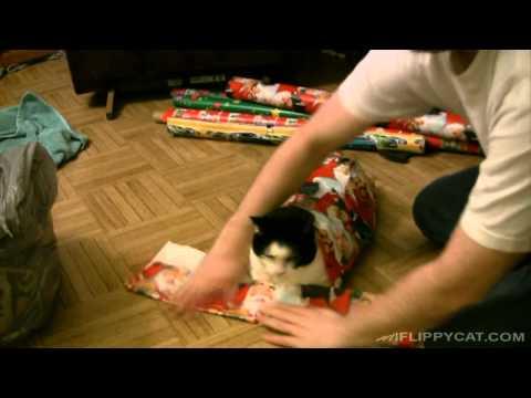 Un Chat Pour Noël ?