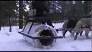 Miniature Horse Snow Roller