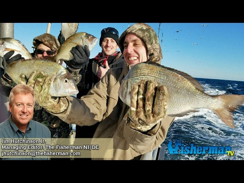 February 9 2017 new jersey delaware bay fishing report for Delaware bay fishing report