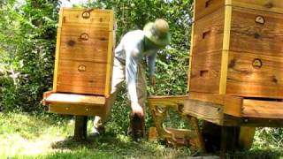 Russian Honey Bees Asheville, NC
