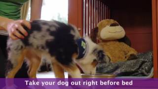 Dog And Puppy Potty Training -  During The Night