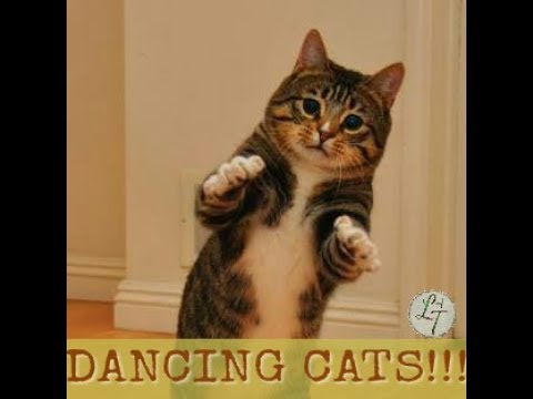 !!! BEST DANCING CATS VIDEO !!! FUNNY CAT VIDEOS!!! CATS COMPILATION 2017