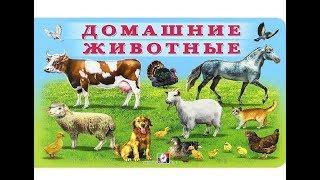Домашние животные | Учим животных | Обучающее видео | Видео для детей