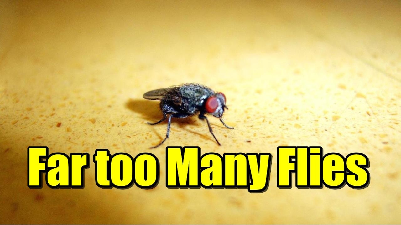 Unsettling Stories Far Too Many Flies