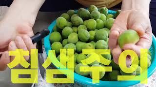 Green plum syrup , Green plum vinegar , Green plum pickle