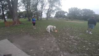 dakota and cooper playing in the dirt