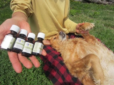 Natural Oils For Ticks On Dogs