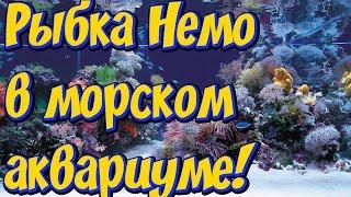 Морские аквариумы! Рыбка Немо! Любителям морских аквариумов посвящается!(В первые на моем канале появилось видео про морской аквариум! В этом видео я показываю несколько морских..., 2017-03-09T20:33:02.000Z)