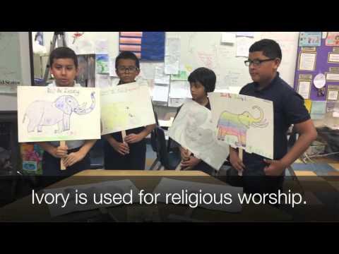 "ELEPHANATICS ""Fights For Elephants"" with Encanto Elementary School"