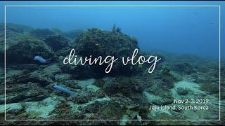 Diving vlog / 제주 서귀포 다이빙 (2019…