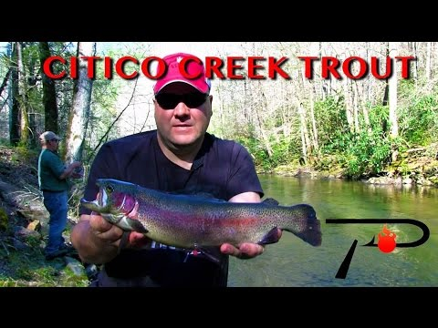 Trout Fishing Tennessee's Citico Creek