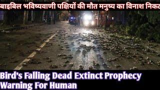 पक्षियों की मौत विलुप्तता बाइबिल की भविष्यवाणी इंसान का विनाश End Time Bible Prophecy Bird's Falling