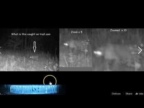 CREEPY!!Mysterious Cryptid Caught On Camera! UFO Palm springs! KENYA HAARP DOME HUGE EVENTS 2016