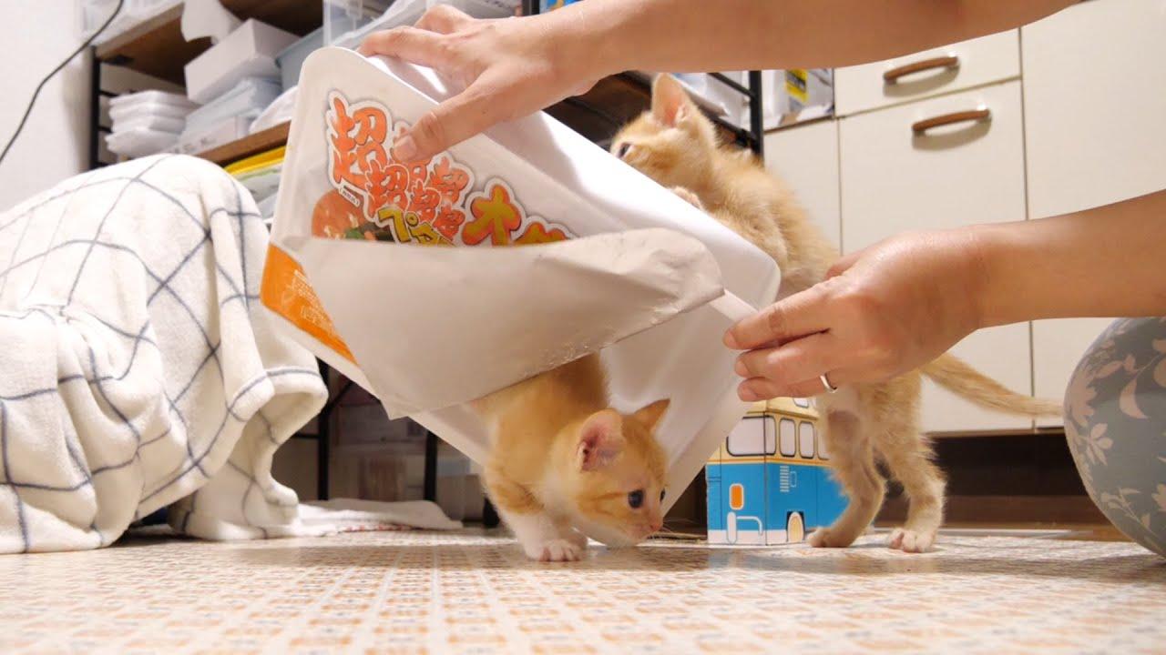 湯切りをしようとしたら子猫が出てくる【赤ちゃん猫 保護猫】