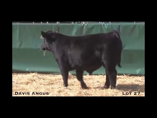 Davis Angus Lot 27