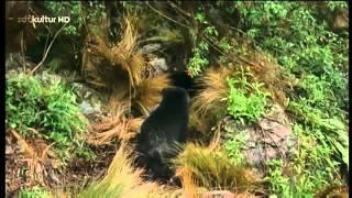 Kostbarkeiten im Nebelwald - EXTREME Schätze in Naturparadiesen [HD Doku DEUTSCH] 2016