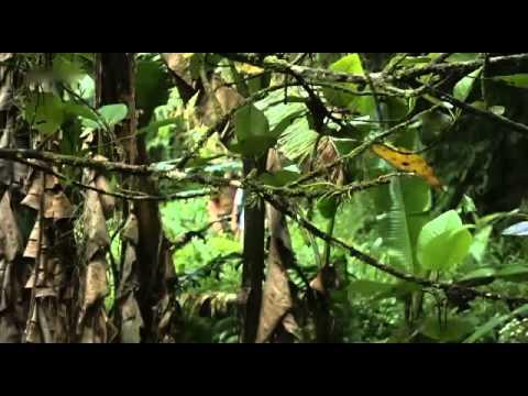 Philippinische Inselwelten   Luzon & Palawan Doku über Inselwelten Teil 2