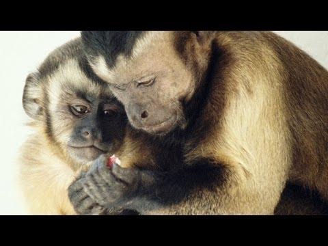 Frans de Waal: Moralisches Verhalten bei Tieren