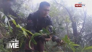 Reel Time: Ang pakikipagsapalaran ng isang orchid hunter sa kagubatan