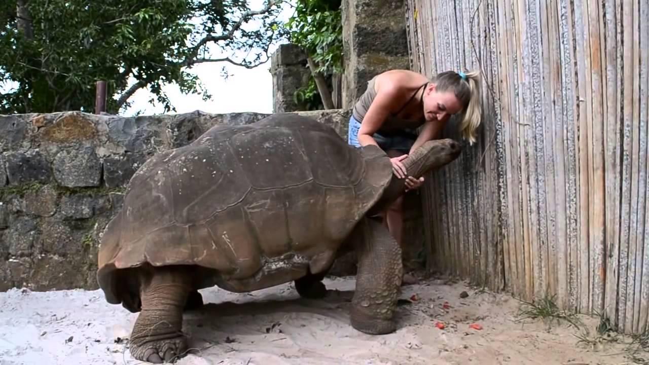 tartaruga gigante tortue g ante giant turtle youtube
