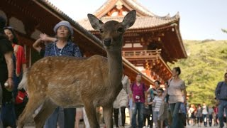 nara deer visit the temple   japan earths enchanted islands episode 1 preview   bbc two