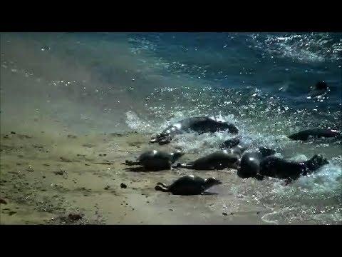 Пляж 2000 смотреть онлайн или скачать фильм через