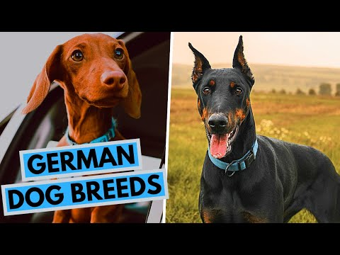TOP 20 German Dog Breeds