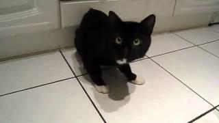 Кот напился валерьянки