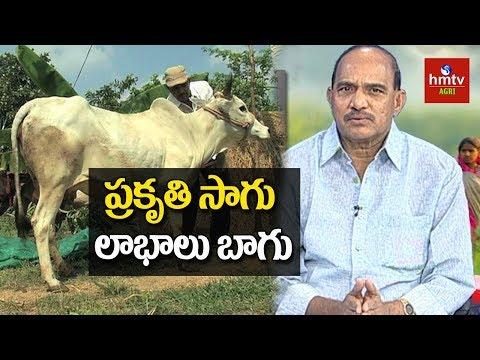 Natural Farming Guide By Haribabu | Importance of Natural Farming | hmtv Agri