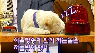 [장수퀴즈] 퀴즈에 나와 잠자는 진돗개 강아지 | EP…