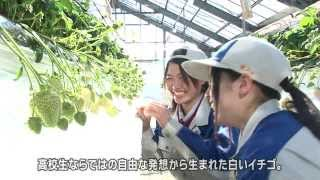 全国有数のイチゴの産地・熊本県。 2012年、阿蘇の高校生たちが、珍しい...