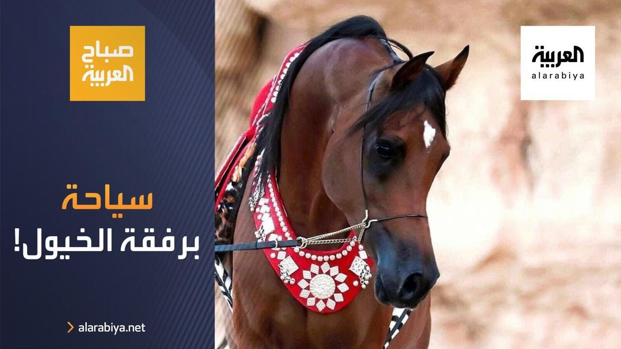 صباح العربية | تجربة سياحية مختلفة برفقة الخيول في تبوك  - نشر قبل 3 ساعة