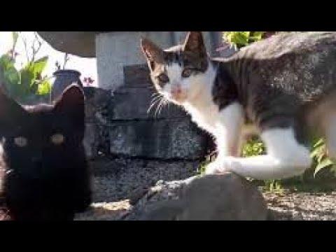 道路をトコトコ歩く子猫についていったら