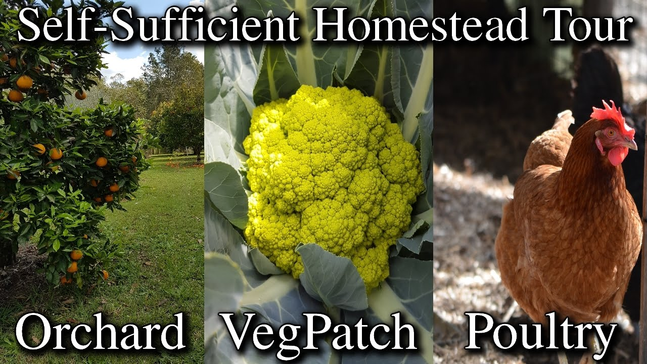 my self sufficient homestead property tour from front to back