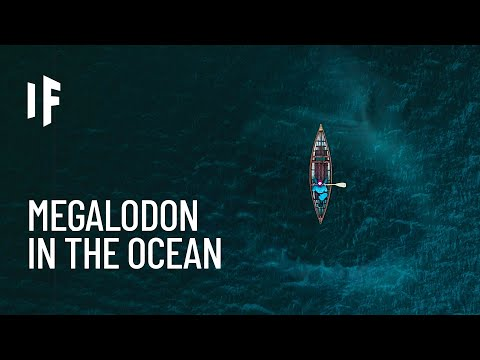 What If Megalodon