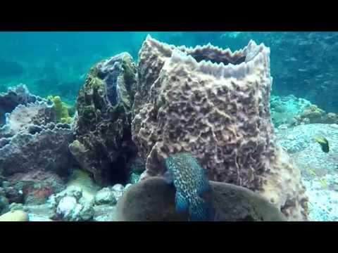 Turtle Bay, St. Vincent SCUBA Diving