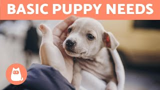What Are a PUPPY'S BASIC NEEDS? 🐶❤️ (10 Puppy Care Essentials)